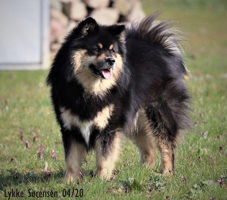 Dog Data Www Lappalaiskoiragalleria Org